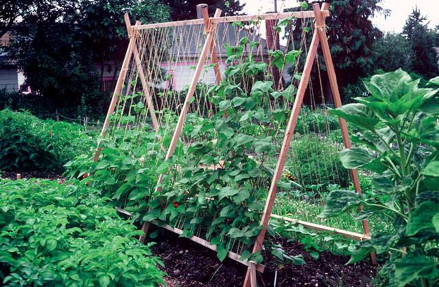 Frühjahrsputz in Ihrem Garten