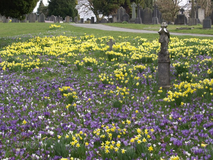 Spring at Kendal Cemetery