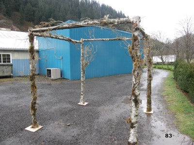 natural woood chuppah wrapped with vine maple