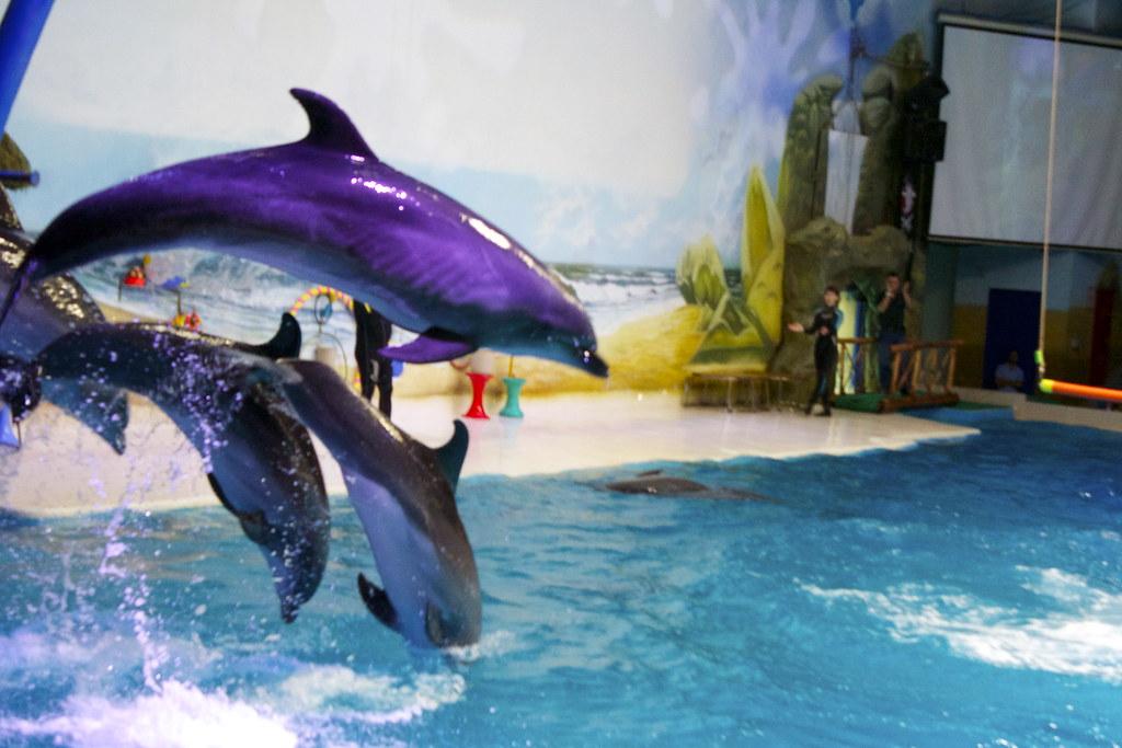 Dolphinarium, Dubai