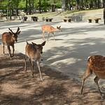 Carmina Japo?n, Nara 01