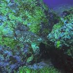 Reeffish vol1.01 (60)