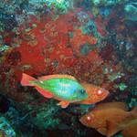 Reeffish vol1.01 (46)
