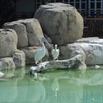 Oceanografic Miguel, aves 01