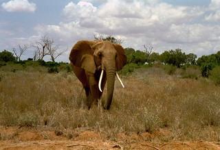 Kenia 2000 - 098