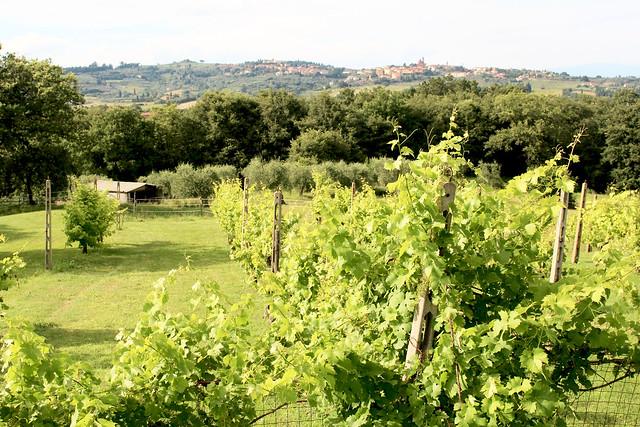 Tuscany Hills - 3