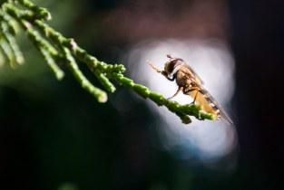 Fly praying