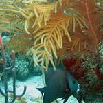 Reeffish vol1.01 (38)