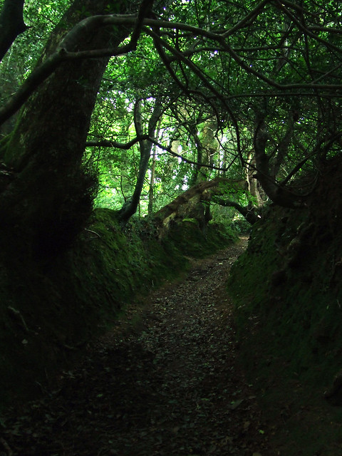 mossy tunnel 1