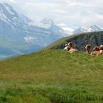 Viajefilos en Suiza, Grindelwald-First 03