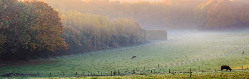 Gelders landschap Landgoed Mariëndaal