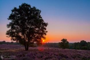 Tree at sunrise @Lemelerberg.