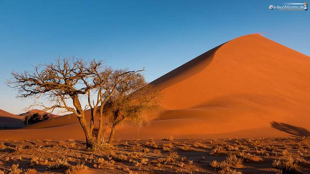 Dune 40 at sunset