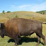 23-Custer SP_