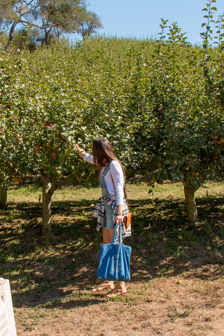 09.17. Clearview Orchards