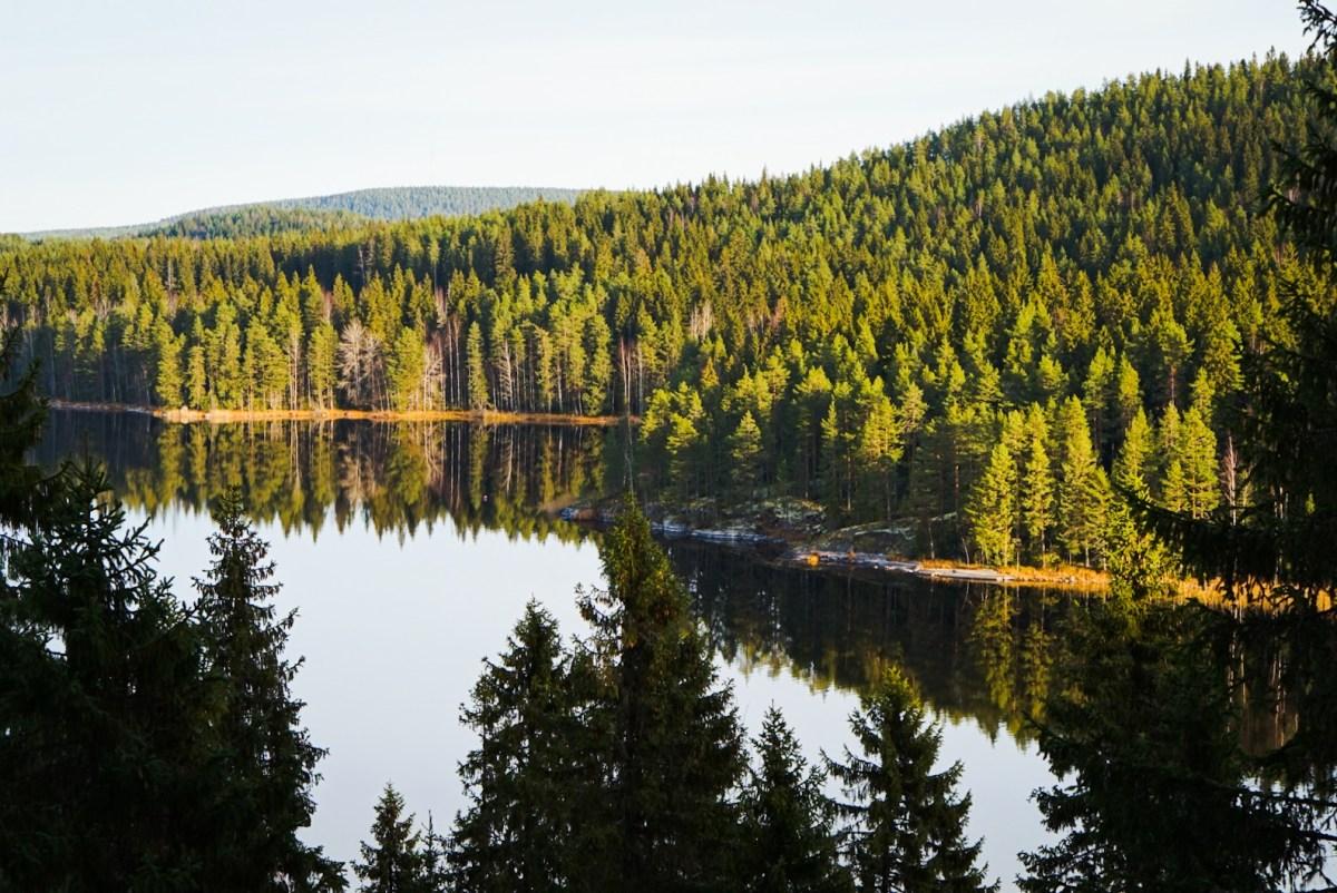 Kuopion luontopolut: Haminalahden kulttuuripolku