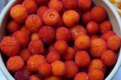 Strawberry - Tree berries