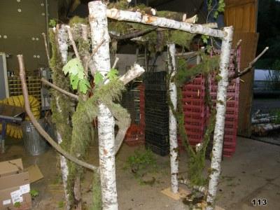 hybrid forest & birch pergola