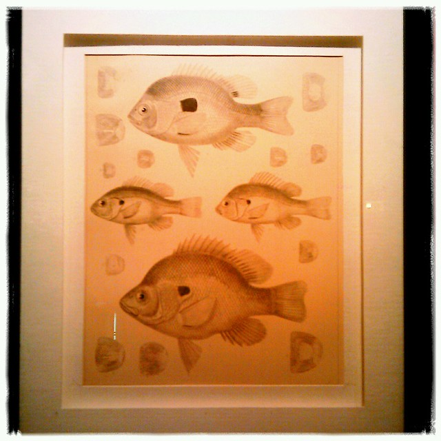 Fish illustrations at Hank's