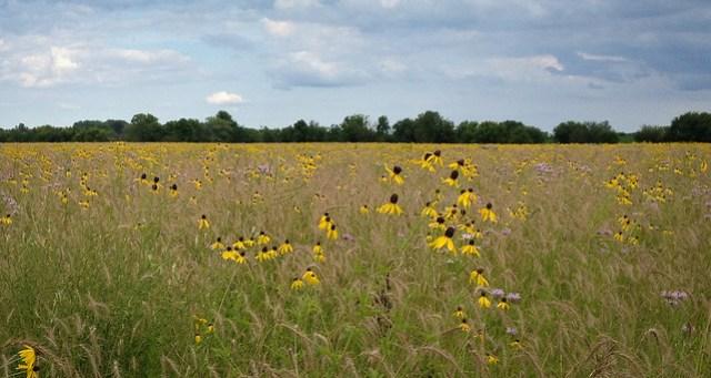 Dunham Prairie in Bloom