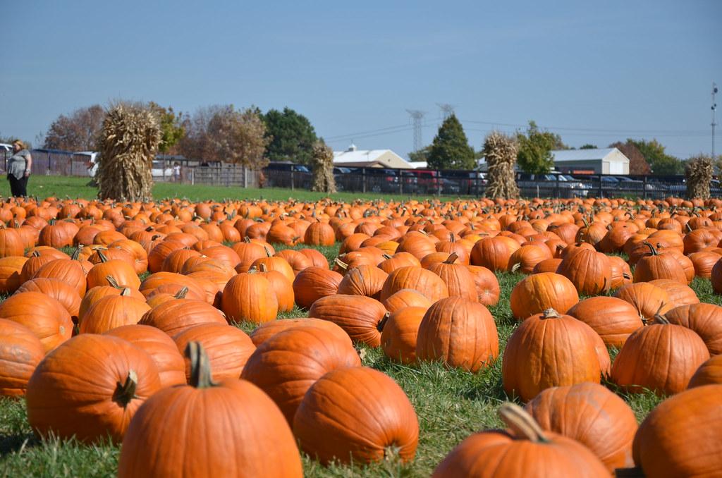Pumpkin Patch   Ryan Bretag   Flickr