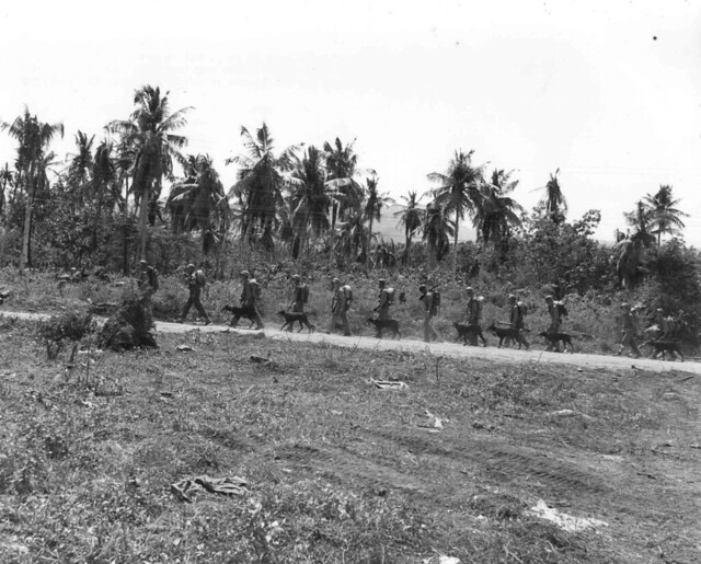 Marines March with War Dogs, 1944