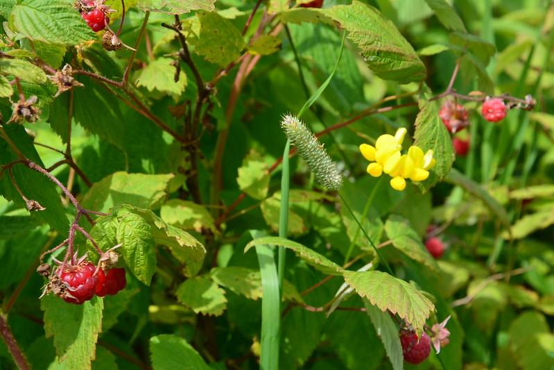 Devil Track Wildflower Sanctuary