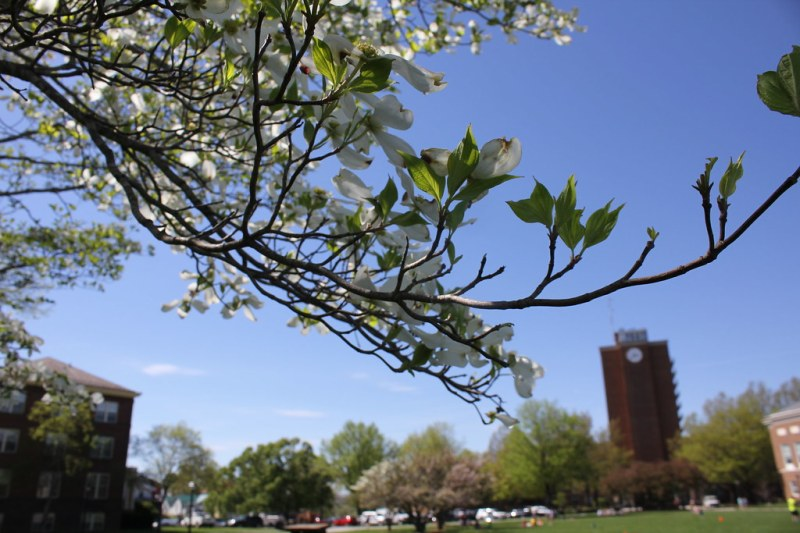 Trees blooming on campus
