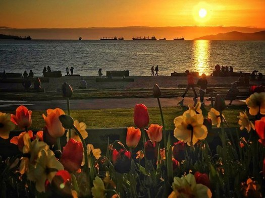 Spring flowers during no April showers. #veryvancouver #sunset #springtime #vancouver #vancouverbc #photos604 #englishbay