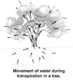 NCERT Solutions for Class 10 Science Chapter 6 Intext Questions 110 Q4