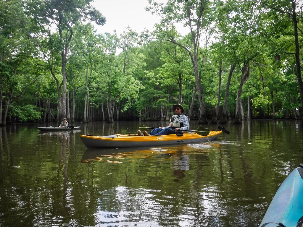 Sparkleberry Swamp