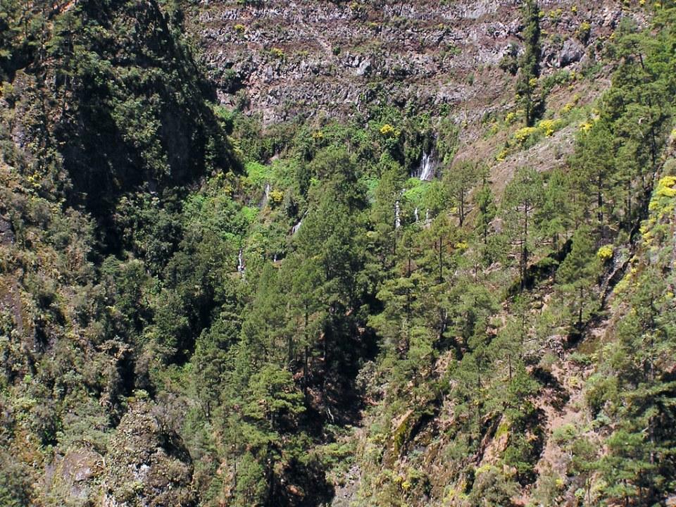 Naciente de Marcos y Cordero Isla de La Palma