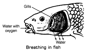 Respiration in Organisms Class 7 Notes Science Chapter 10 4
