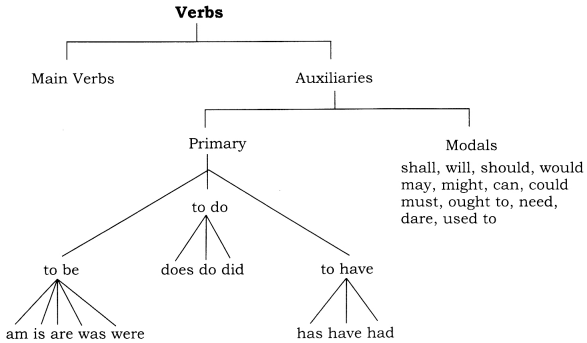 CBSE Class 8 English Grammar Verb 1