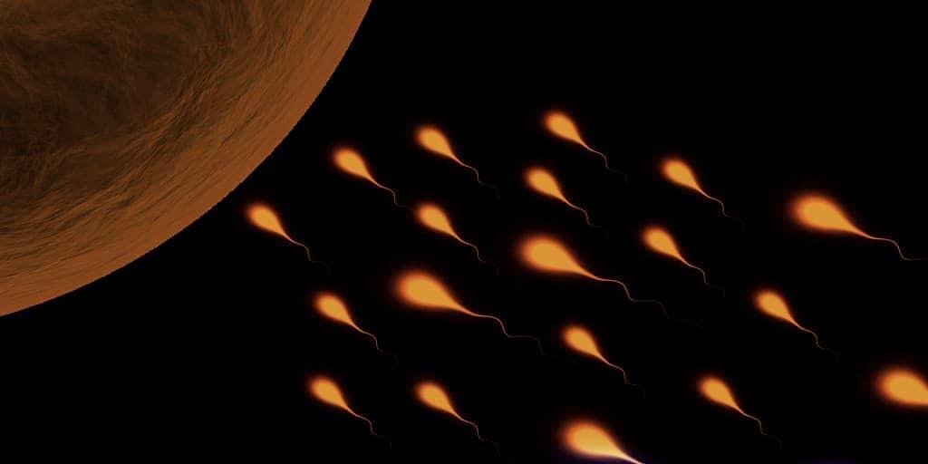 sperme-protéine-contraceptif-infertilité