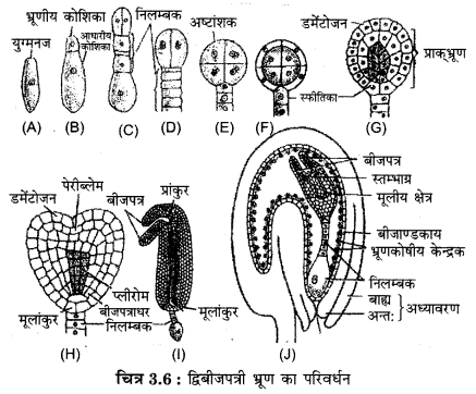 RBSE Solutions for Class 12 Biology Chapter 3 2Q.6