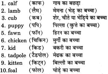 RBSE Class 7 English Useful Words of Daily Use 9