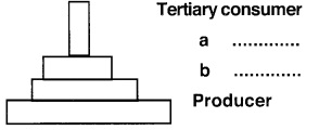 Plus Two Botany Chapter Wise Previous Questions Chapter 7 Ecosystem 9