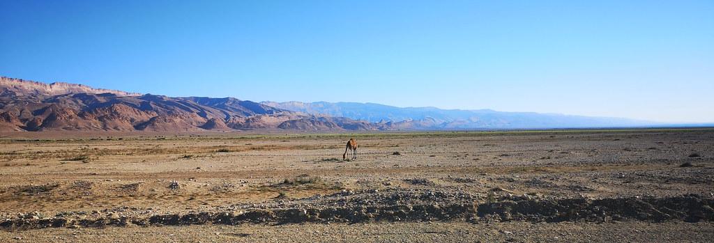 vista del desierto Oung El Djemel de Tozeur a Chebika Tunez 03
