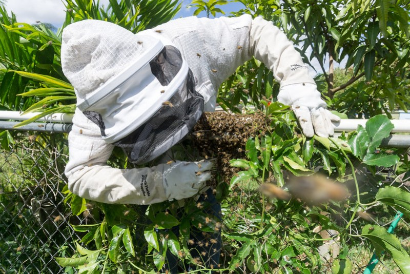 Airbnb Experience in Florida: Bee Adventure Workshop with Healthier to Go in Southwest Ranches, Fla., May 1, 2019