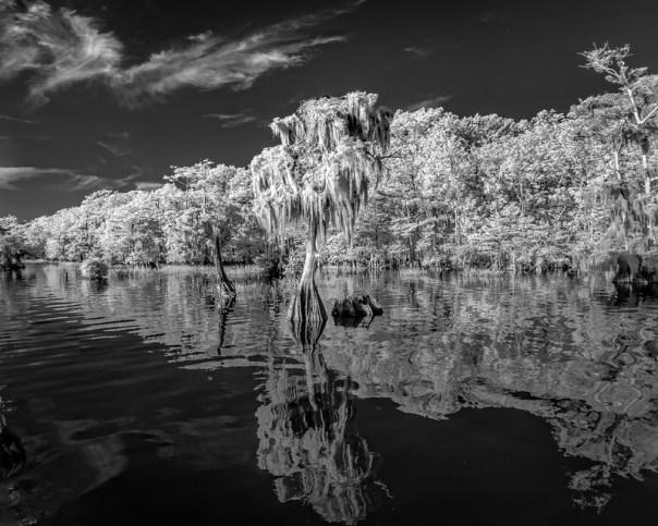 Blue Cypress Shoreline