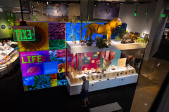 Colourful and lifelike exhibitions in the Perot mesuem of Nature and Science