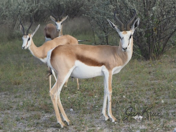 Young Springboks