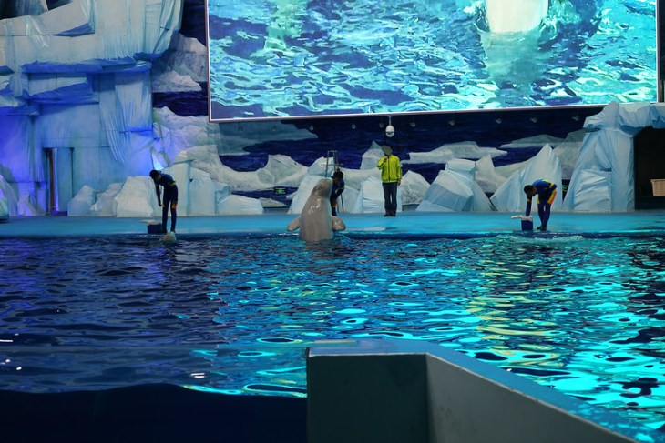 2017 CCA investigation into Fuzhou Luoyuanwan Polar Ocean World