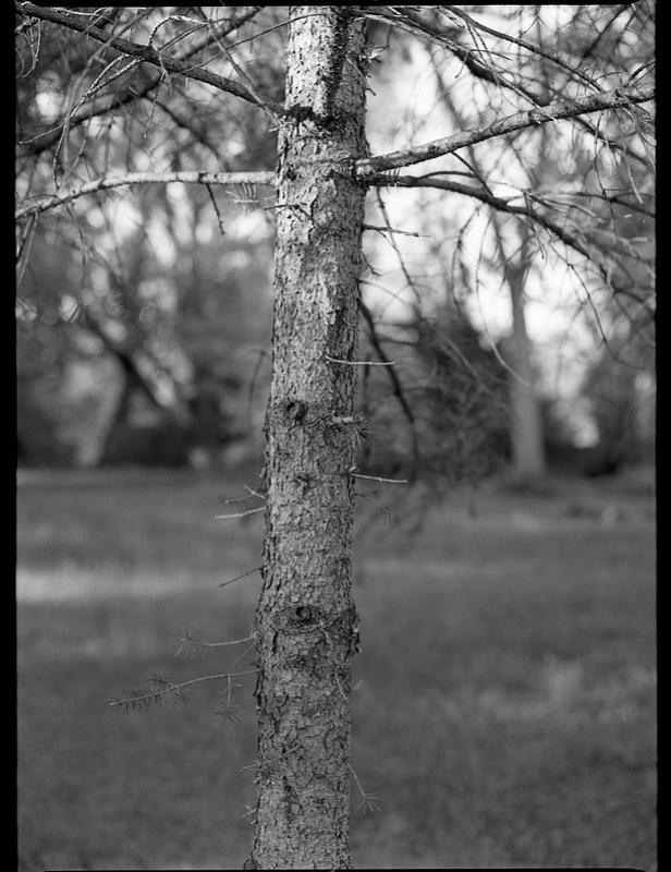 figurative tree forms, branches, Asheville, NC, Mamiya 645 Pro, mamiya sekor 80mm f-2.8, Kodak Tri-X 400, HC-110 developer, 4.27.19
