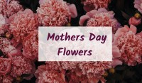 mothers day 2019 flowers carnation
