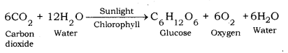 Life Processes Class 10 Notes Science Chapter 6 25