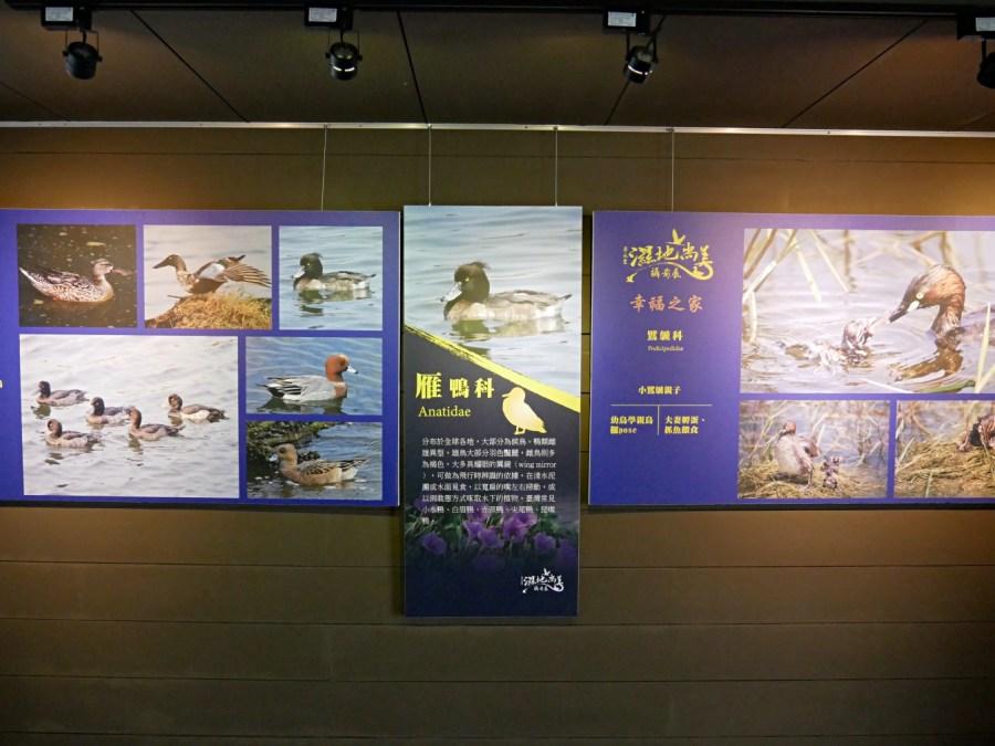 [臺南旅遊]黑面琵鷺生態展示館|台江國家公園內七股區免費景點~濕地賞鳥適合親子旅遊 @VIVIYU小世界