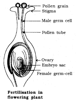 How do Organisms Reproduce Class 10 Notes Science Chapter 8 11