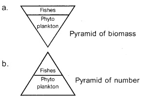 Plus Two Botany Chapter Wise Previous Questions Chapter 7 Ecosystem 8